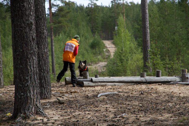 Viima. Niinisalon pelastuskoiraleirillä v. 2011.